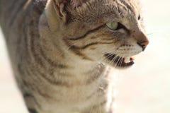 Близкий снимок дикого кота с цветами стоковое изображение