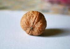 Близкий снимок одиночного грецкого ореха стоковые изображения rf