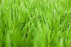 близкий стеклянный зеленый цвет вверх Стоковое Изображение RF