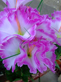 близкий цветок вверх по фиолету Стоковые Фотографии RF