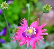близкий цветок вверх Стоковые Фото