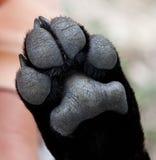 близкий щенок лапки вверх Стоковое Фото