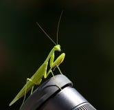 близкий mantis моля вверх Стоковые Фото