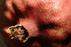 близкий pomegranate вверх стоковые фотографии rf
