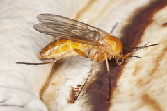 близкое весьма polypore мухы сидя малое поднимающее вверх Стоковое фото RF