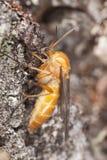 близкое весьма polypore мухы сидя малое поднимающее вверх Стоковые Изображения RF