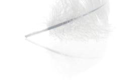 близкое перо вверх по белизне Стоковое Изображение