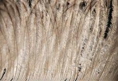 близкое перо вверх Стоковое Фото