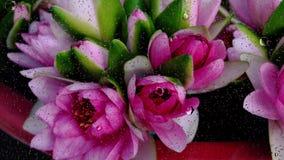 Близкое поднимающее вверх изображение цветка падений дождя понижаясь на стеклянное окно видеоматериал