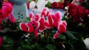 Близкое поднимающее вверх изображение цветка падений дождя понижаясь на стеклянное окно сток-видео