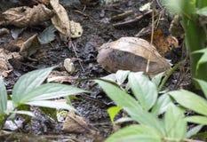 Близкое поднимающее вверх фото черепахи стоковые фотографии rf