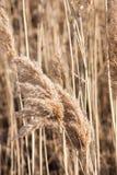 близкое поле ontario вверх по зиме Стоковое Изображение