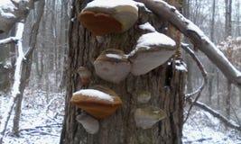 Близкое фото грибов на дереве Стоковая Фотография