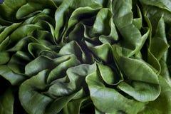 близкое salade вверх Стоковое Фото