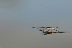 близкое treader болотоа вверх Стоковое фото RF