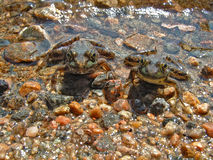 близнец лягушек Стоковое фото RF