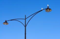 близнец улицы светильника птиц Стоковое Фото