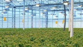 Блок растительности с огромным количеством растущих заводов в ем видеоматериал