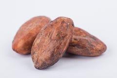 Бобы кака шоколада изолированные на белой предпосылке Стоковые Фото
