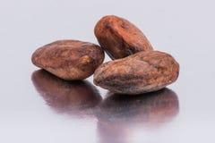 Бобы кака шоколада изолированные на белой предпосылке Стоковые Фотографии RF