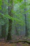 Богатая лиственная стойка с сломленным деревом Стоковая Фотография RF