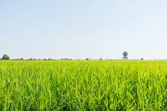 Богатое поле Стоковые Фото
