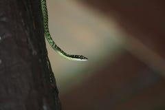 Богато украшенная змейка летания Стоковое Изображение RF