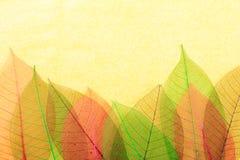 Богато украшенные листья стоковое изображение