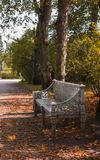 Богато украшенный стенд с апельсином выходит в парк в осени стоковое фото