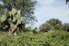 Богатые кактусы и хорошее солнце приспособили заводы Стоковые Изображения RF