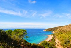Цветы Сардинии Стоковая Фотография