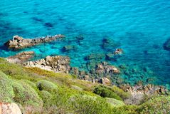 Цветы Сардинии Стоковая Фотография RF