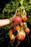 богатый урожай Стоковые Фотографии RF