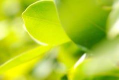 богачи макроса листва Стоковые Фото