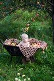 богачи хлебоуборки Стоковые Фотографии RF