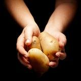 богачи хлебоуборки Стоковая Фотография