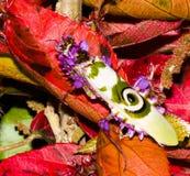 Богомол на ярких листьях красного цвета, вскоре после своя метаморфоза от своего этапа ` харча ` Стоковые Фото