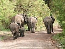 бодает слона Стоковая Фотография