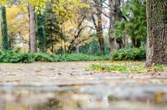 божественный путь парка утра ландшафта Осень Стоковое Фото