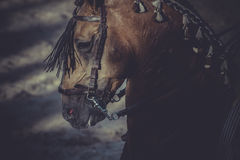 Бой быков, традиционная испанская партия где матадор воюя a Стоковое Изображение