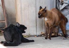 Бой котов Стоковое Фото