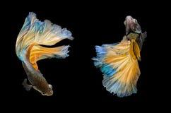 Бой, рыба Стоковая Фотография
