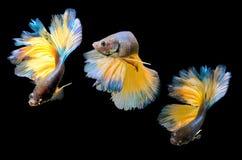 Бой, рыба Стоковое Фото