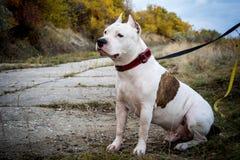 Бой собаки Стоковое Фото