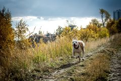 Бой собаки Стоковое Изображение RF