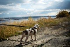 Бой собаки Стоковые Изображения RF