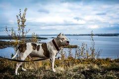 Бой собаки Стоковые Фото