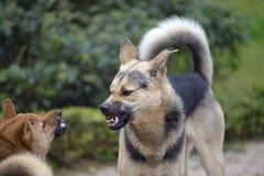 Бой собаки стоковая фотография rf