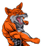 Бой спорт Fox иллюстрация штока