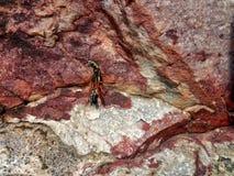 Бой черепашки Стоковая Фотография RF
